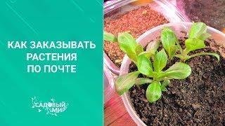 Как заказывать растения по почте и сохранить до весны