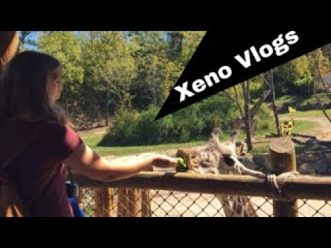 Cincinnati Zoo Vlog