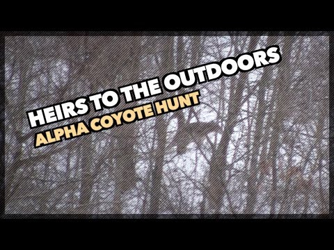 Pennsylvania Daytime Coyote Hunt | Alpha Coyote Takedown - Heirs To The Outdoors