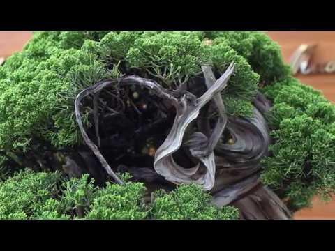 Amy Liang Bonsai Garden