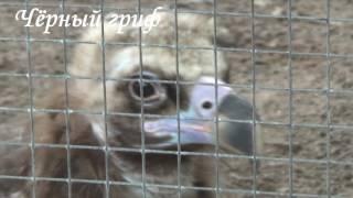 Орлы и совы в Питерском зоопарке