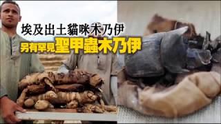 埃及罕見聖甲蟲木乃伊出土 數十隻貓木乃伊陪葬 | 台灣蘋果日報