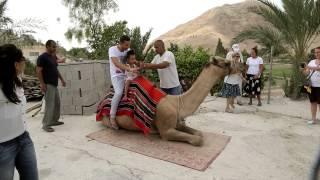 Jerycho   przejażdżka na wielbłądzie