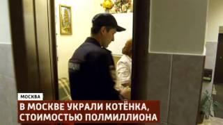 В столице похищен котенок стоимостью полмиллиона рублей