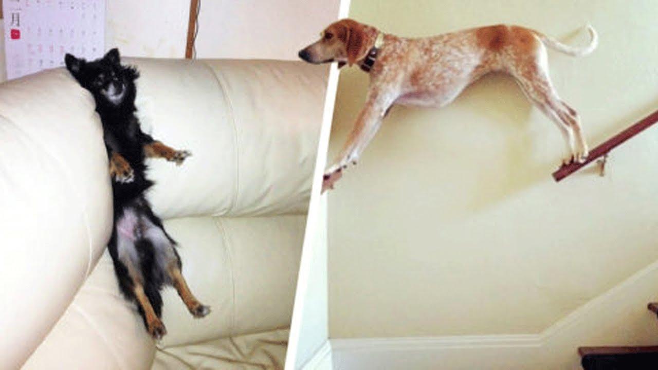 Animales que perdieron la batalla contra muebles youtube for La contra muebles