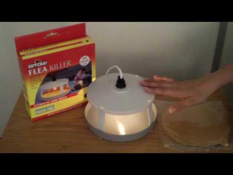 flea killer trap youtube. Black Bedroom Furniture Sets. Home Design Ideas