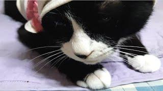 (고양이랑친칠라랑)오늘…