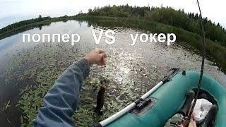 Поппер VS уокер: это праздник какой-то (видео-отчет) рыбалка сентябрь 2015 Ловля щуки на поппер.