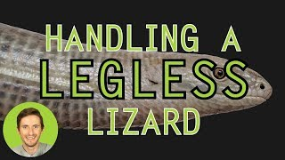 How to Handle a Legless Lizard
