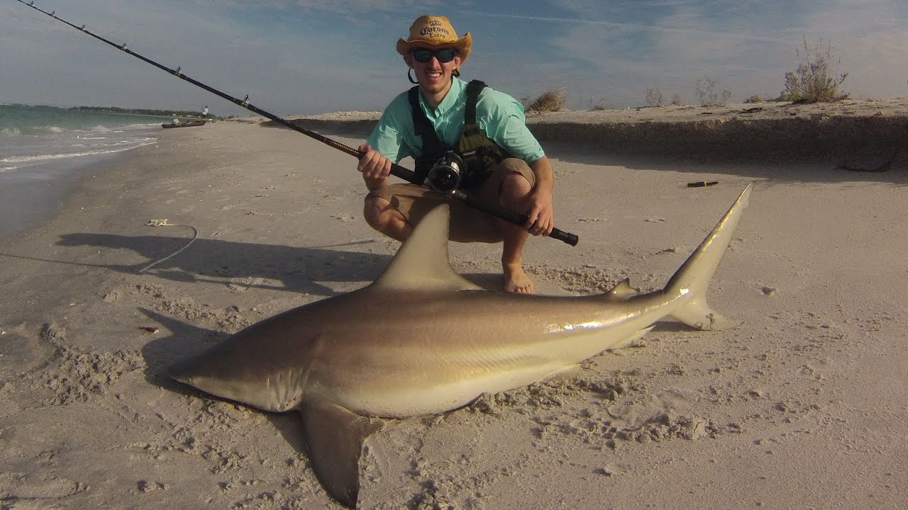 Landbased blacktip shark fishing southwest florida youtube for Shark fishing in florida