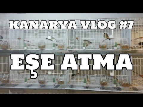 Hobihanem - Kanarya Vlog #7 (Eşe Atma) [14.03.2017]