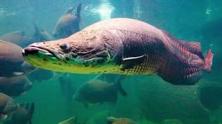 10 DEADLIEST River Monsters Of The Amazon!