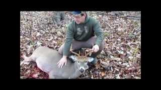 Bow hunting kill 2014 Bowtech Experience w/ Ulmer edge broadhead