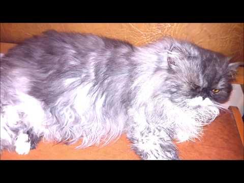 Приколы с любимым Ваниным котом