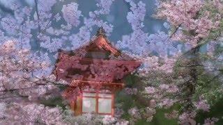 Цветущая сакура(, 2014-04-01T11:59:06.000Z)