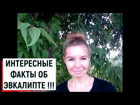 ИНТЕРЕСНЫЕ ФАКТЫ ОБ ЭВКАЛИПТЕ!!!