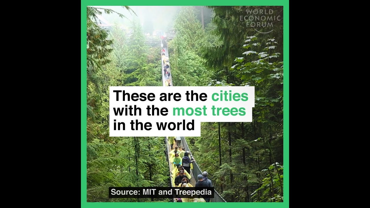 These are the cities with the most trees in the world