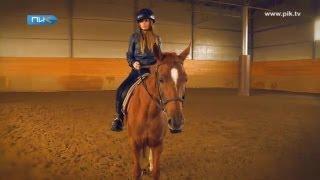 видео Дело Академии конного спорта