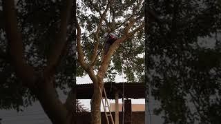 Tuổi trẻ tài cao. Tuổi già tài càng cao 14/01/2018. Thổ Tang - Vĩnh Tường - Vĩnh Phúc