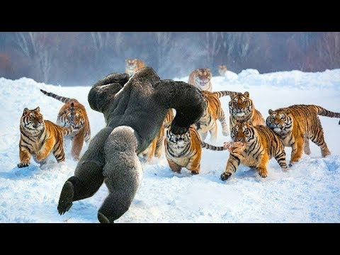 10 Most Fearless Animals In The World
