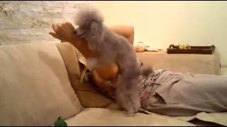 Hilariously funny dog / Нереально ржачная собака
