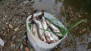 Ловля ХАРИУСА в таёжной речке/Яма напрочь забита хариусом!Fischen \