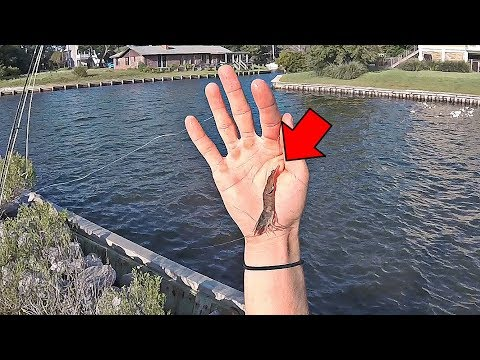 Fishing With Live Shrimp Around Docks & Inlets