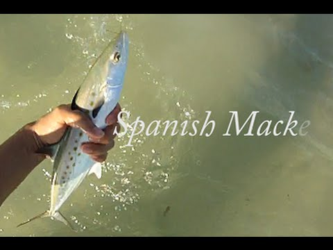 St. Petersburg Florida Beach Fishing in Spring- Near John's Pass (Madeira Beach) GoPro