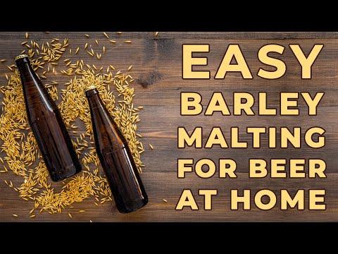 How to Malt Barley at Home   Homemade Beer Recipe   Homebrew India