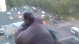 Попугай Гриша-делает обзор!большой попугай его хочет сожрать!и чудные виды из окна.👻потом домой