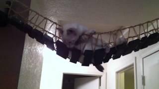「インディ・ジョーンズのつり橋」の上でダメになる猫