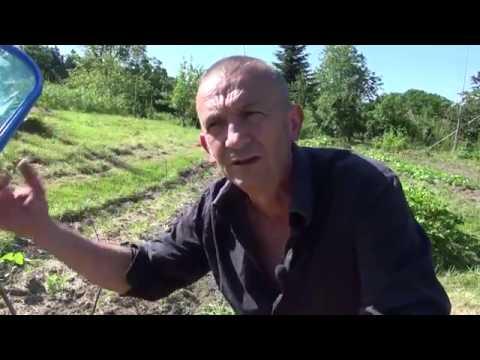 Permaculture, agroécologie : le jardin vivant de Christophe Gatineau