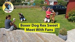 Boxer Fans Meet Boxer Rex
