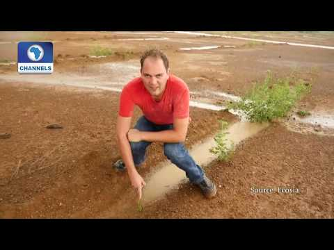 German Search Engine Funds Reforestation In Africa  Eco@Africa 