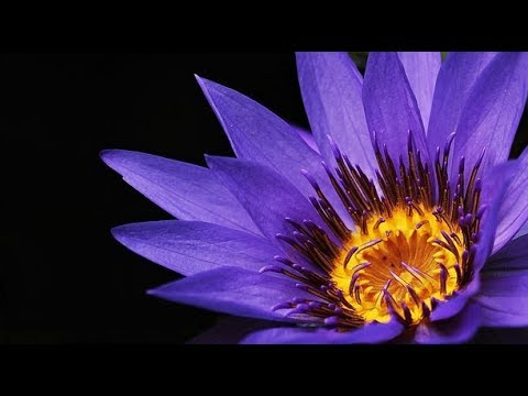 7 Enlightened Attitude Adjustments That Make Life WAY Easier