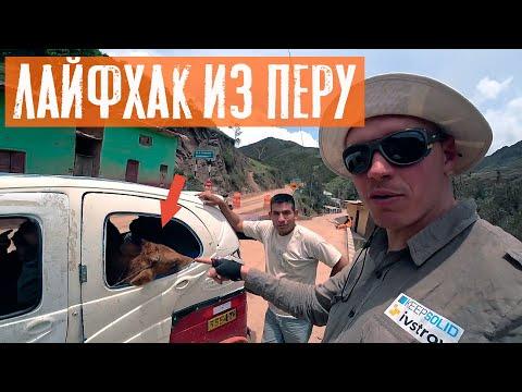Как перевезти корову в тук-туке | Путешествие по Перу | #6