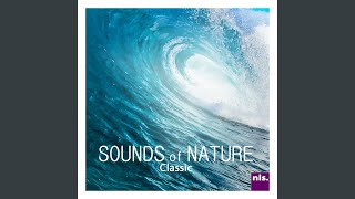 Earth Heart Beat - Sounds of Nature