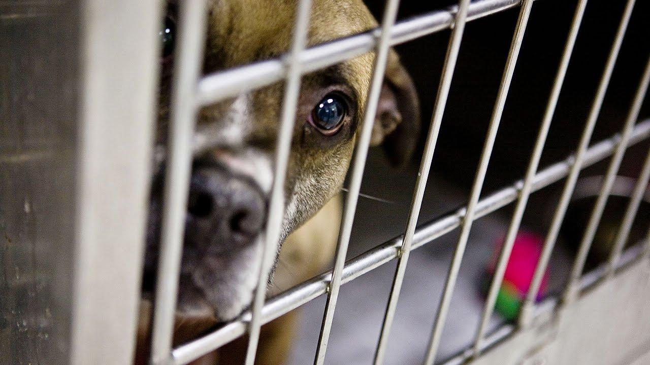 The Dog Pound Vlog Dog Rescue and Life at the Dog Pound