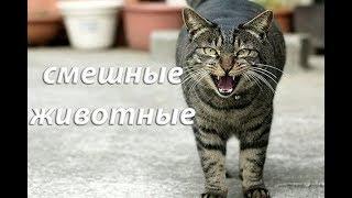 Смешные гифки. Смешные животные. Смешные видео Выпуск №1