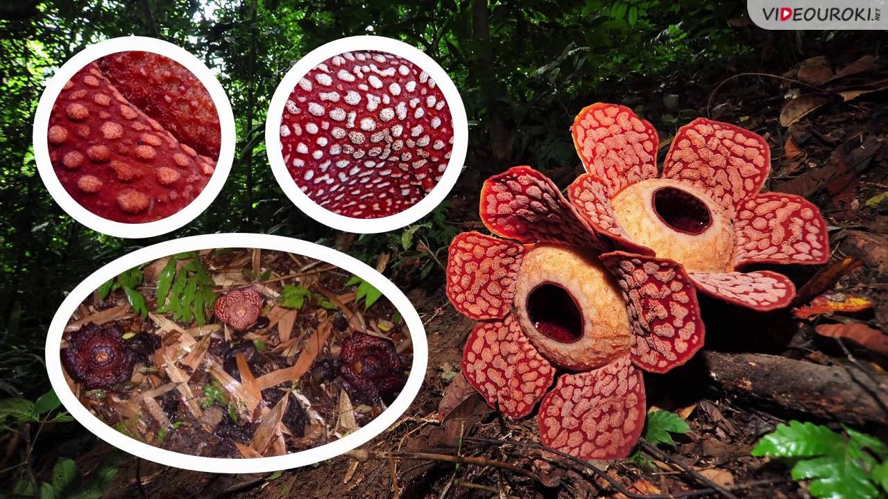 Необычные растения мира