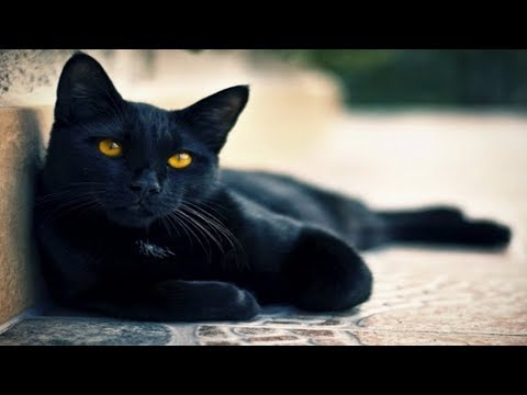 Заговор на кота или кошку для денег и удачи. А у тебя есть кот?