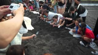 今年6月、八丈島・底土海岸でアカウミガメが6年ぶりに産卵。護岸工事...