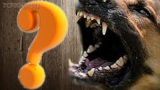 Что делать если напала собака | Что нельзя делать.(Что делать если напала собака на Вас? Нужно обладать достаточной информацией, чтобы при нападении собаки..., 2016-03-10T05:02:51.000Z)