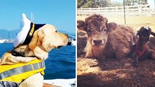 20 Funny & Cute Animal Videos #7