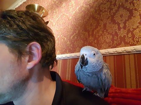 Попугай матершинник чувачок салам эй Вася говорящий попугай Рико йоу йоу кто насрал Жако