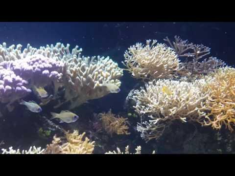 Ozeanographisches Museum Monaco