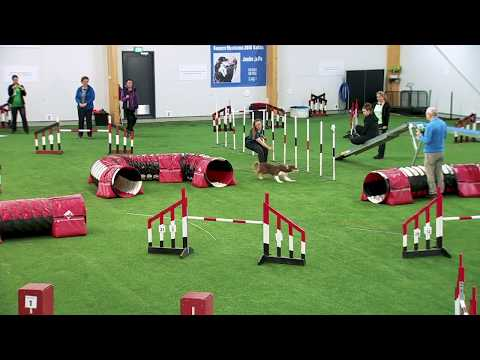 International Agility Training Week - CCC Between Obstacles - Preview