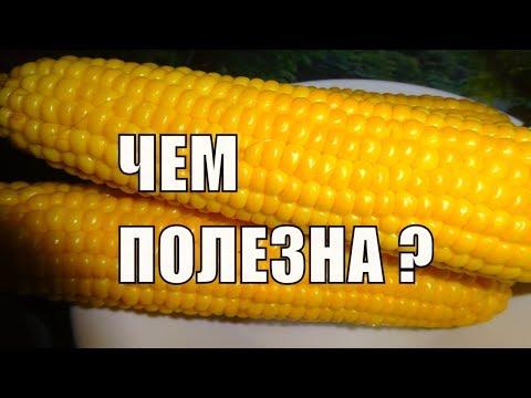 КУКУРУЗА Польза и противопоказания к употреблению кукурузы