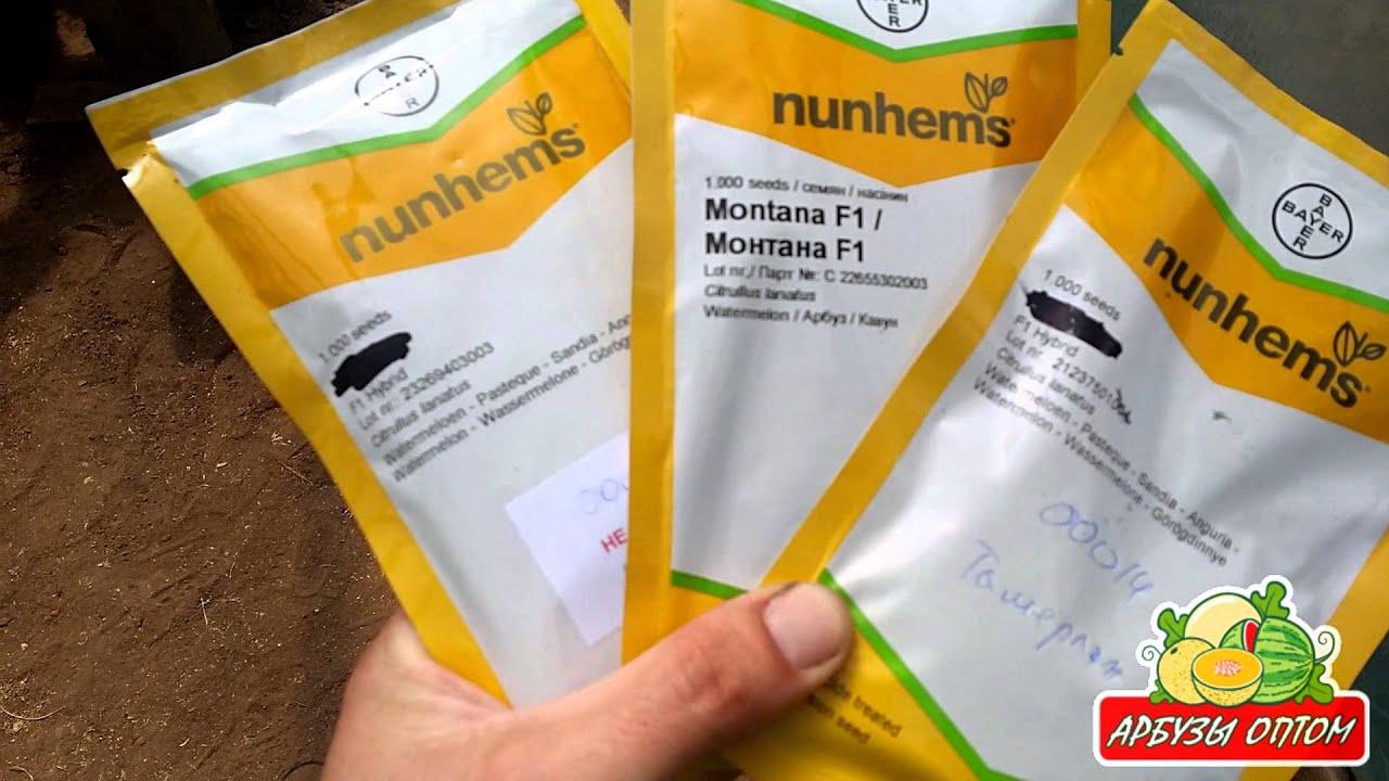 Хотите купить семена арбуза в украине почтой?. Интернет-магазин smartsad предлагает купить семена арбуза оптом и в розницу по лучшим ценам!