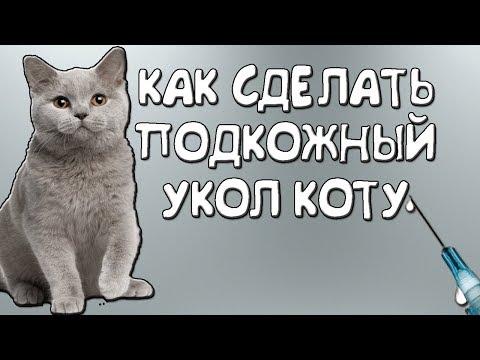 Как сделать подкожный укол коту?